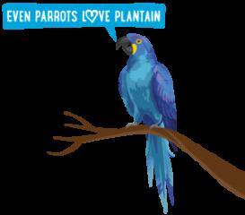 parrotPlantain_300px